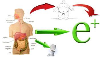 digestivo-energia